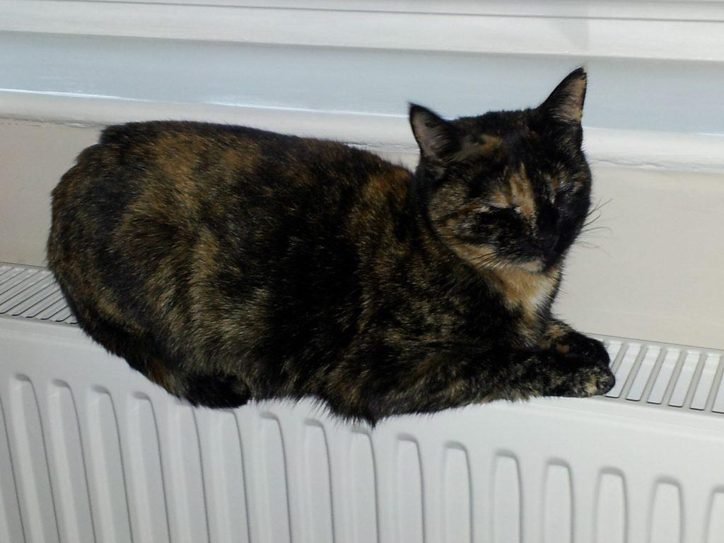 cat named Tessa