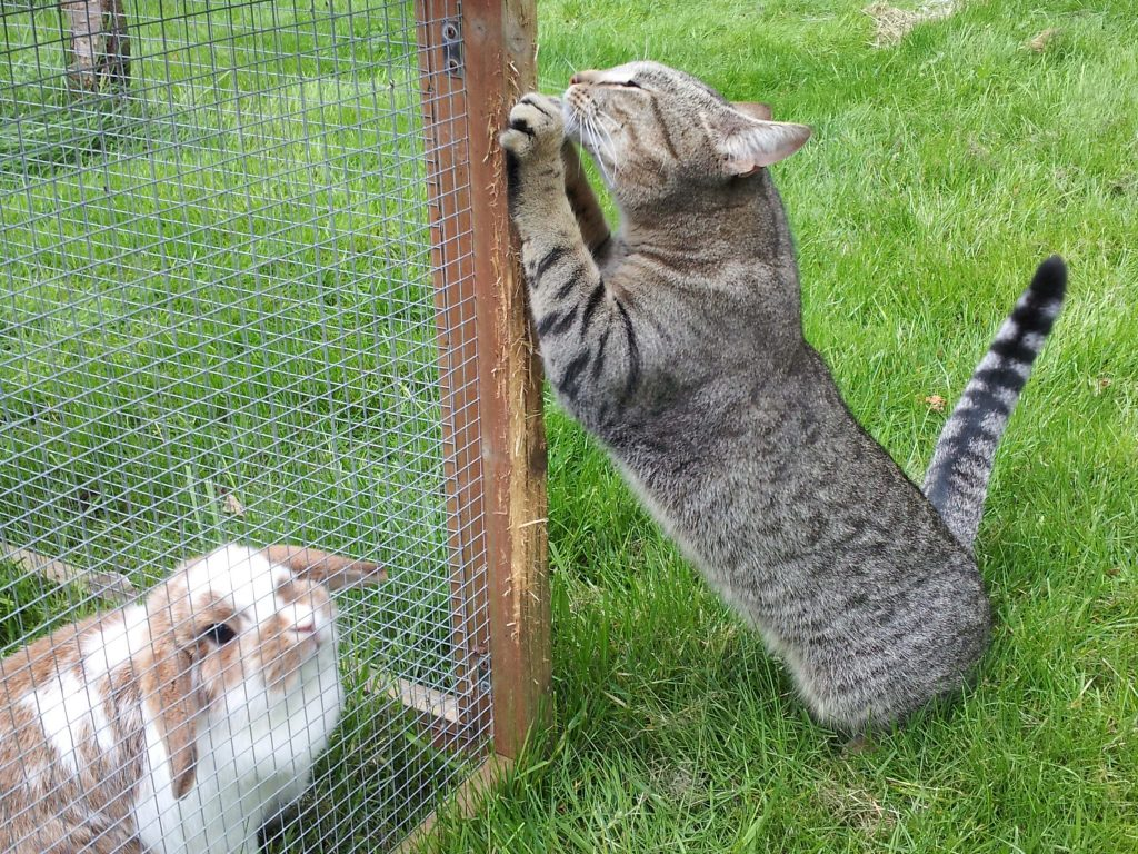 cat named April and rabbit named Cinnamon