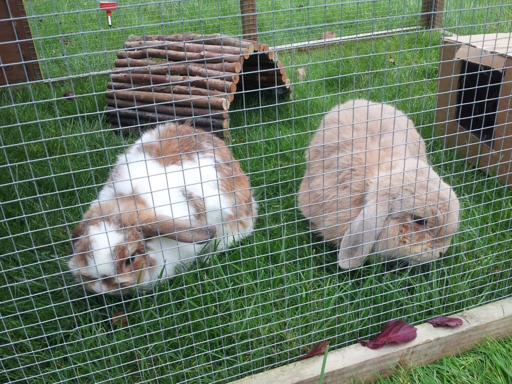 rabbits named Sandy and Cinnamon