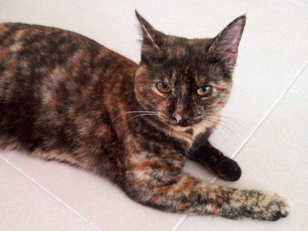 cat named Cassie