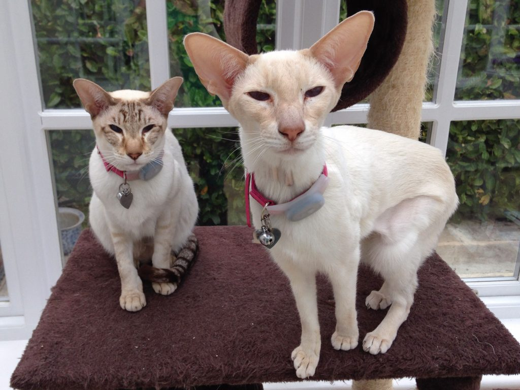 cats name Theia and Phoibe