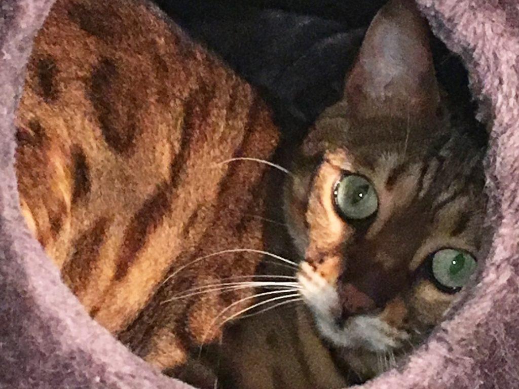 cat named Jessie