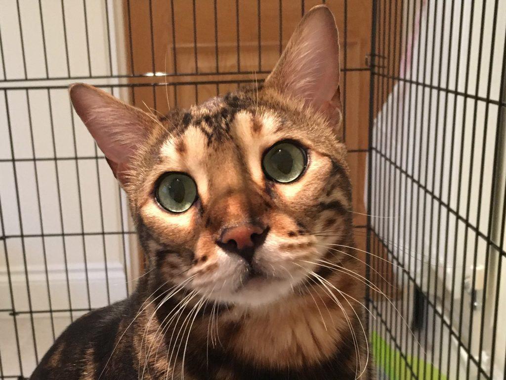 cat named Dexter