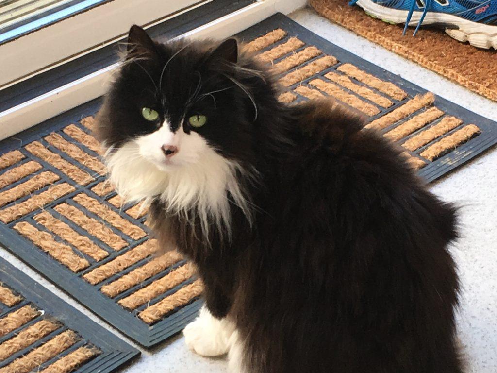 cat named Evie