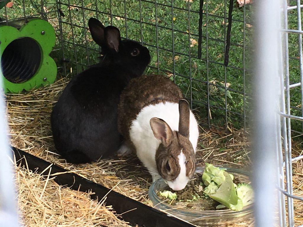 bunnies named Hazel and Maurice