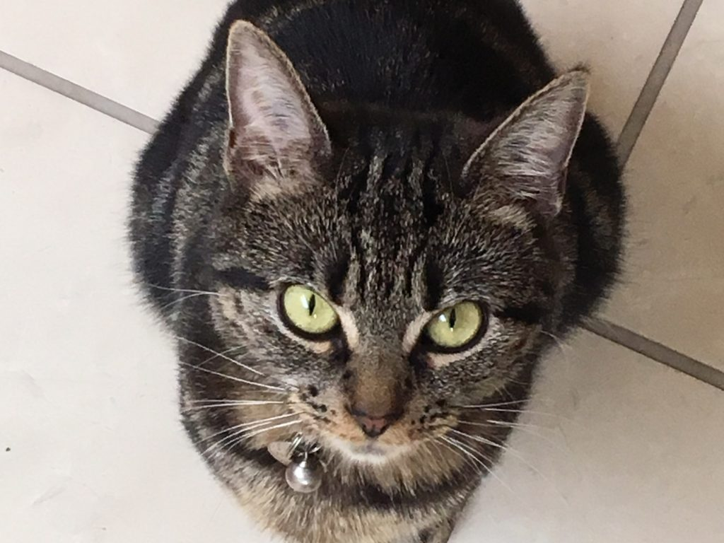 cat named Nina
