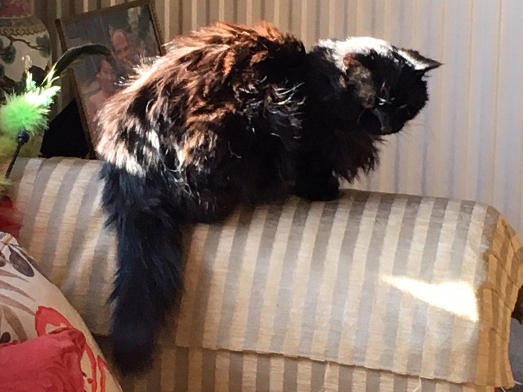 cat named Sophie
